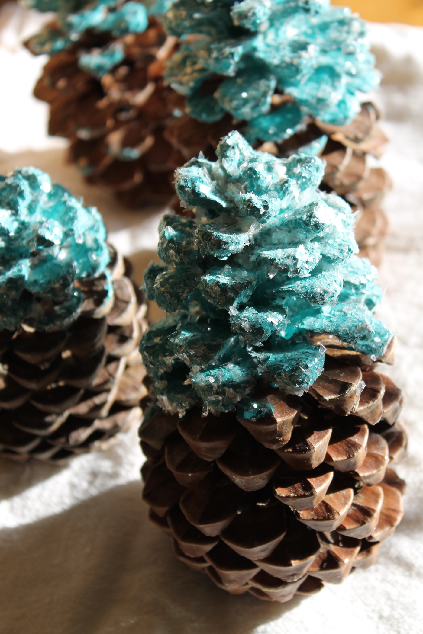 set of pinecones