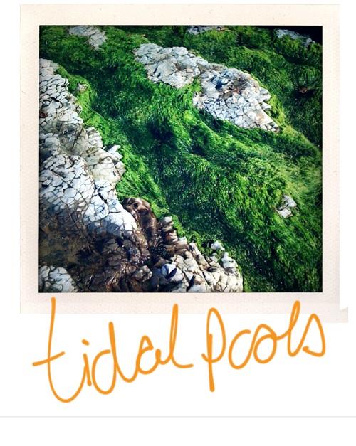 tidalpools