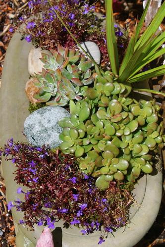 planter top view