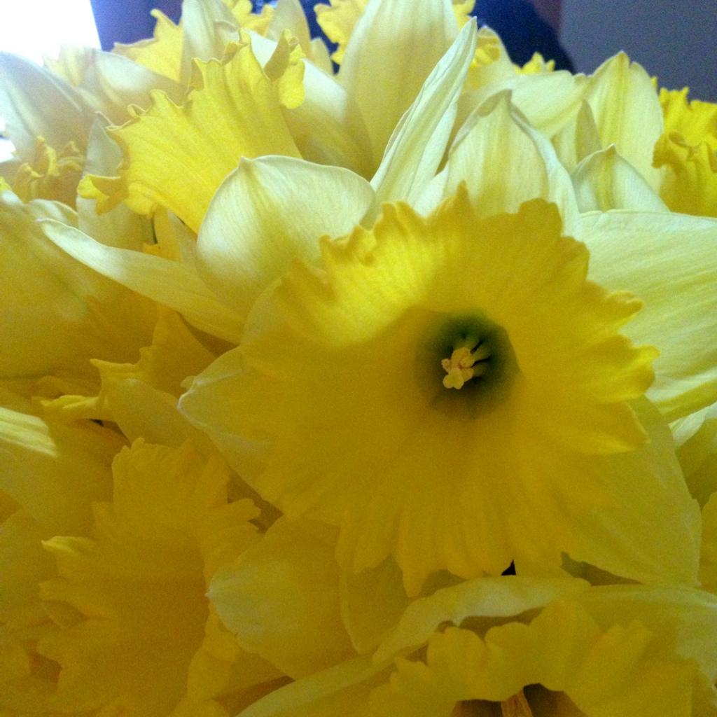 Diptic-15 daffodils